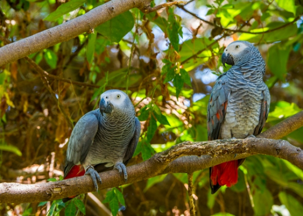 birds in way of extinction The extinction crisis  species, most of biodiversity's benefits take place at a local level, and conserving local populations is the only way to ensure genetic diversity critical for a.